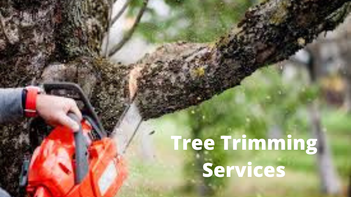 Protect Your Plants And Property By Taking Tree Trimming Services!