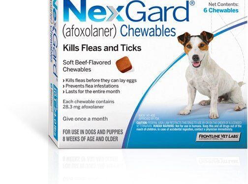 Know everything about nexgaurd for dogs